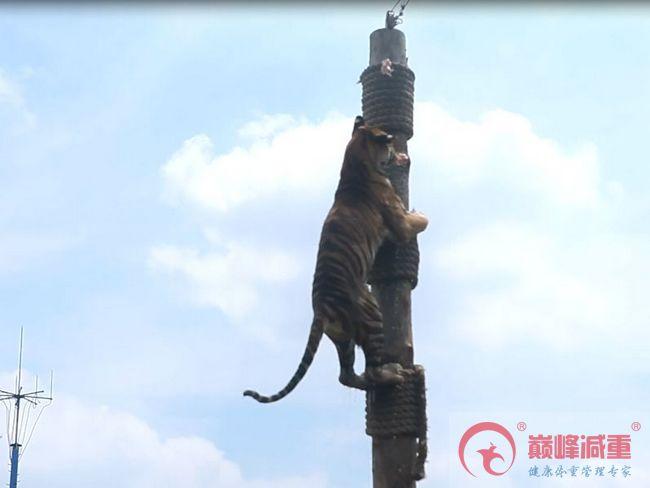 夏令营旅游片之上海野生动物园